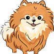 Pomeranian — Stock Photo