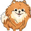 Pomeranian — Stock Photo #11129005