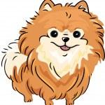 Pomeranian — Stock Photo #11129005