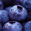 Wet blueberries — Stock Photo #12141277