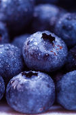 Wet blueberries — Stock Photo