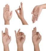 Hand Collage — Stock Photo