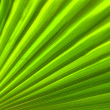 Palm leaf — Stock Photo #11990969