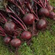 Stock Photo: Freshly picked beetroot vegetables
