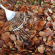Pile of autumn leaves and rake on grass lawn — Stock Photo