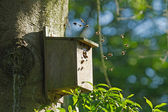 Bumblebees in Bird Nest Box — Stock Photo