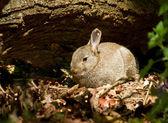 Jovem coelho na floresta — Foto Stock