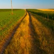 Country road running through the agricultural fields on sunny summer day — Stock Photo