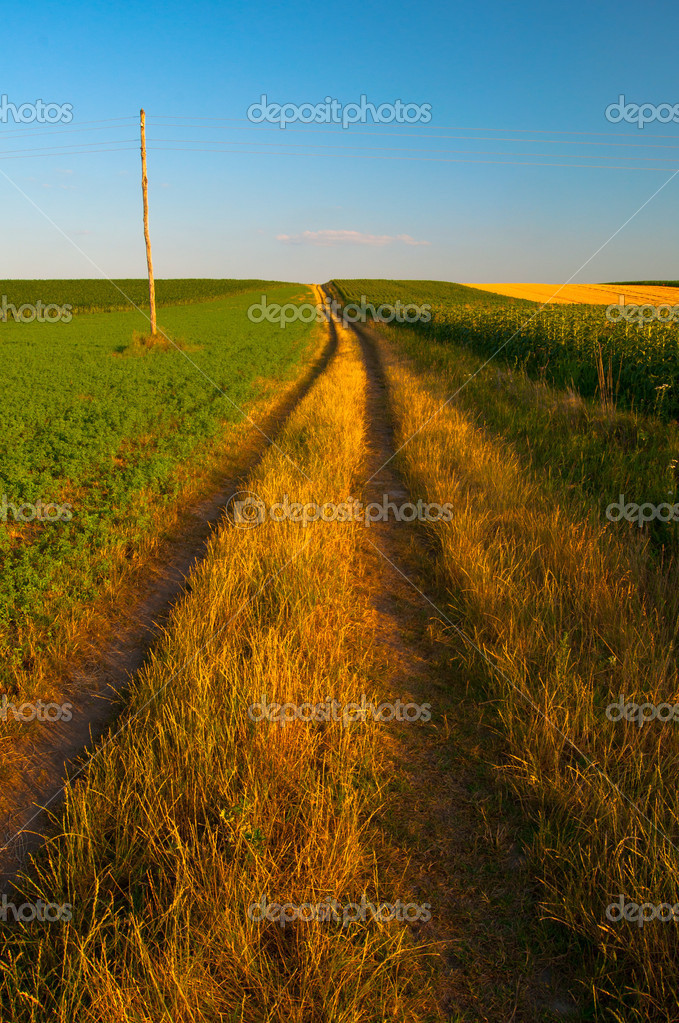 Country road running through the agricultural fields on sunny summer day — Stock Photo #11371091