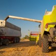 Royalty-Free Stock Photo: Modern combine harvester unloading grain into the trucks trailer on sunny summer day