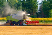 Harvester combine harvesting wheat on sunny summer day — Stok fotoğraf