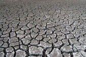Cracked soil during drought — Stock Photo