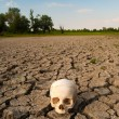 Human skull on the soil of dried out lake during summer drought — Stock Photo