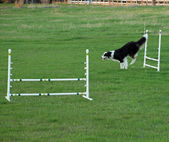 Dog Jumping at an Agility Training — Stock Photo
