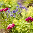 Perennial flower bed — Stock Photo