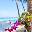 Orchids on the Beach — Stock Photo