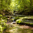 Stream in the forest - Zdjcie stockowe