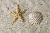 Starfish and mussel — Stock Photo