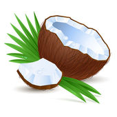 Half a coconut — Stock Vector