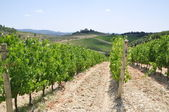 Vineyard in Tuscany, Italy, landscape — Stock Photo