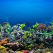Coral Reef — Stock Photo #11250402
