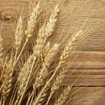 Wheat. — Stock Photo #11250706