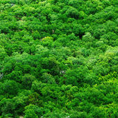 Tree tops — Stock Photo