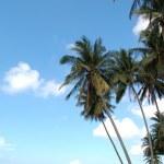 Palm trees at beach — Stock Photo