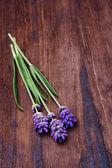 Lavendel på trä bakgrund — Stockfoto