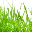 Fresh green grass with drops of water, close-up — Stock Photo