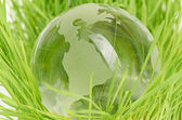 Environment concept, glass globe in the grass — Stok fotoğraf
