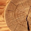 Close-up wooden cut — Stock Photo #11994268
