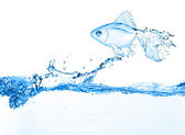 Fish made from water splash — Stock Photo