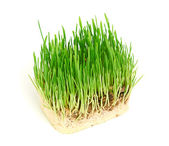 Green grass showing roots — Stock Photo