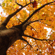 autumn tree — Stock Photo #12204273