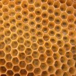 Honey texture — Stock fotografie