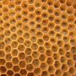 Honey texture — Stock Photo
