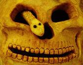 Halloween pumpkin background — Stock Photo