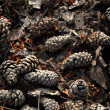 Old pine cones background — Stock Photo