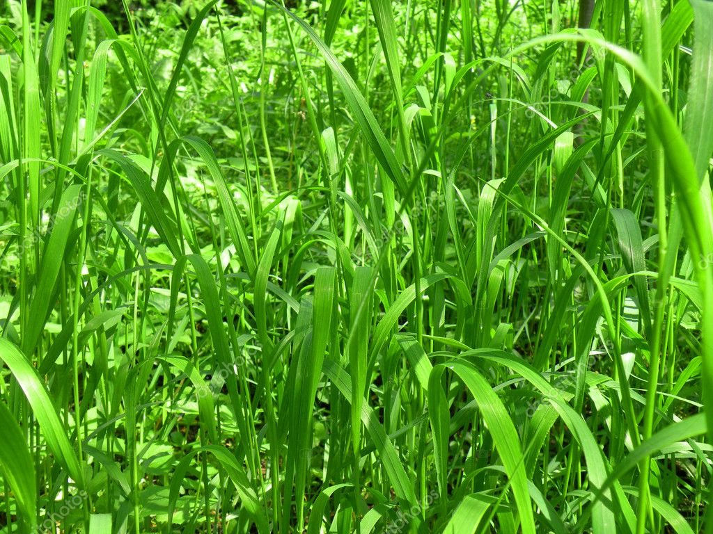 Grass background  Stock Photo #10760410