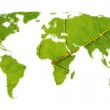 World map with leaf texture — Stock Photo #11855615