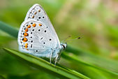A butterfly — Stock Photo