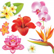 Stock Vector: Set of tropical flowers