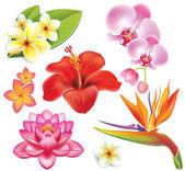 Conjunto de flores tropicales — Vector de stock