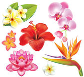 Set of tropical flowers — Stock Vector