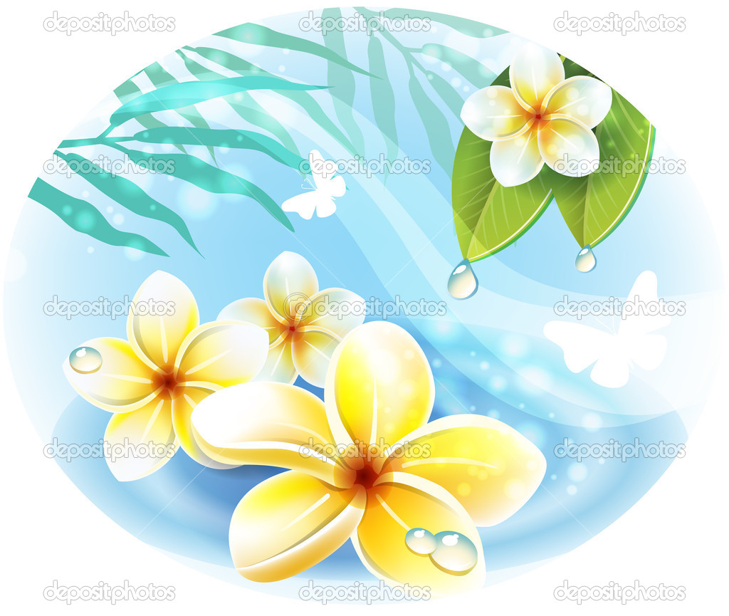 Frangipani plumeria flowers on the water — Stock Vector #11803134