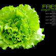 Fresh green salad isolated on black background — Stock Photo