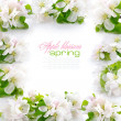 Royalty-Free Stock Photo: A frame is from an apple blossom on a white background