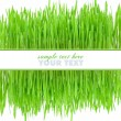 Frame is from a green grass on a white background — Stock Photo
