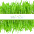 Stock Photo: Frame is from green grass on white background